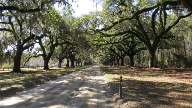 Avenue of the Oaks, Boone Hall Plantation, Charleston, South Carolina