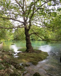 Dreamy arms of an oak tree