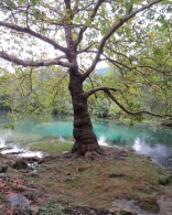 Tree and blue/green water
