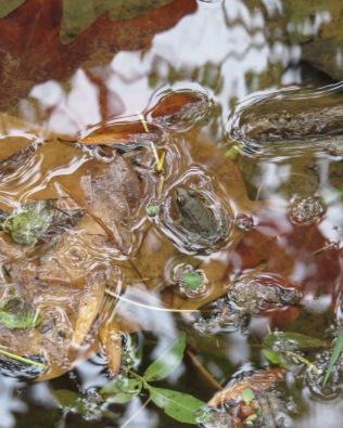 Tiny frog at water's edge